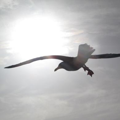qi-gong-oiseau